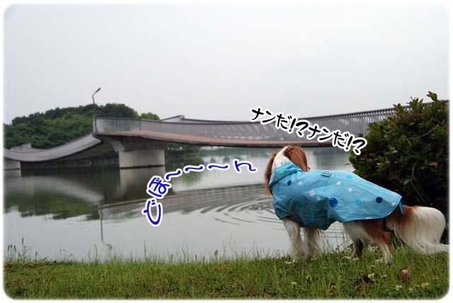 20110527_59.jpg