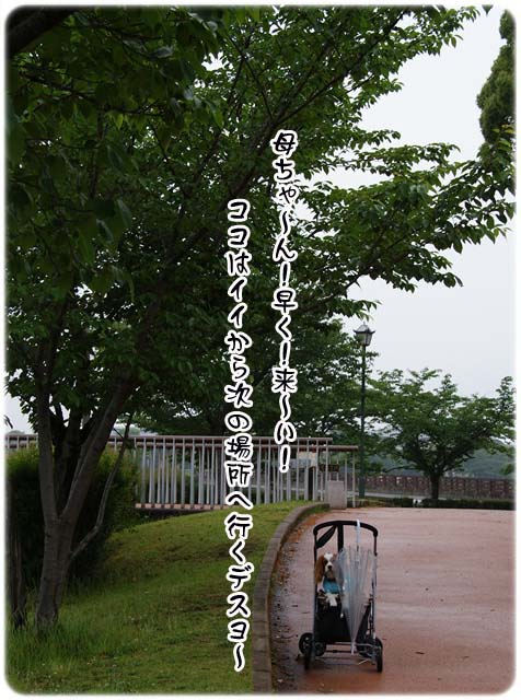 20110527_69.jpg