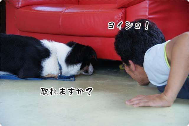 20110624_13.jpg