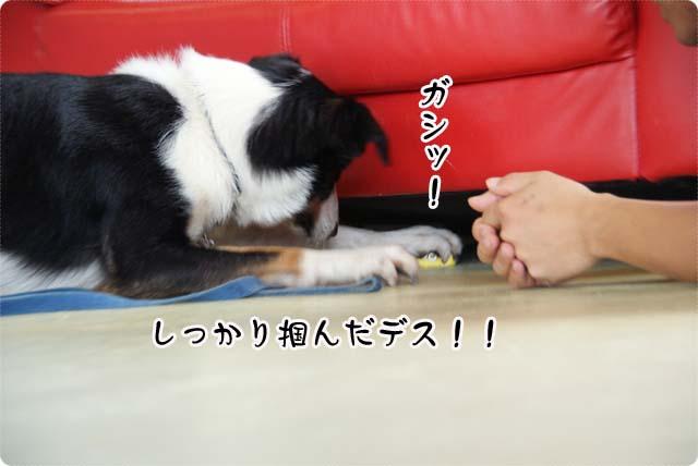 20110624_29.jpg
