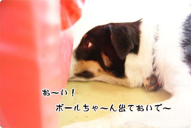 20110624_35.jpg