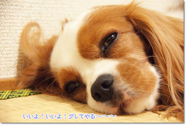 20110711_2.jpg