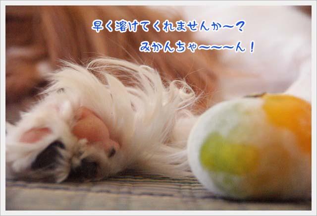 20110729_2.jpg