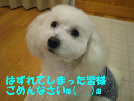 IMG_2276-1.jpg