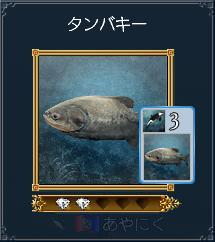 タンバキー(発見250・カード62)