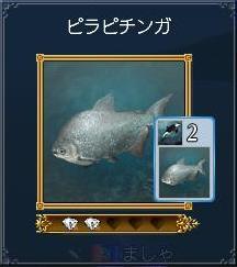 ピラピチンガ(発見240・カード60)