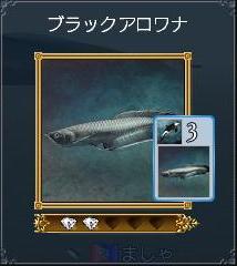 ブラックアロワナ(発見260・カード65)