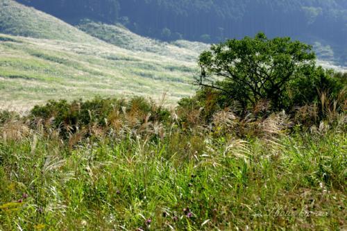 湿生公園から仙石原を眺める