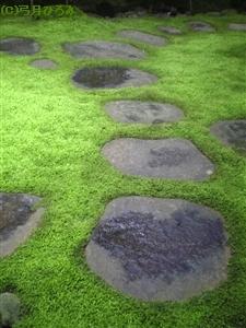 緑にむす苔