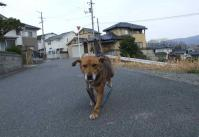 散歩20120330-2