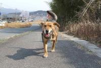 散歩20120330-4