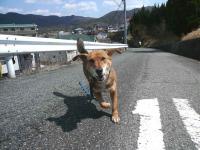 散歩20120331-2