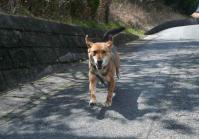 散歩20120331-3