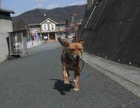 散歩20120331-4