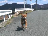 散歩20120331-5