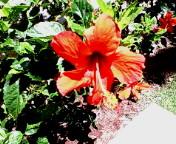 ハワイ 2007 3