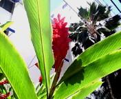 ハワイ 2007 4