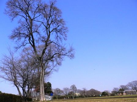 20070321-13.jpg