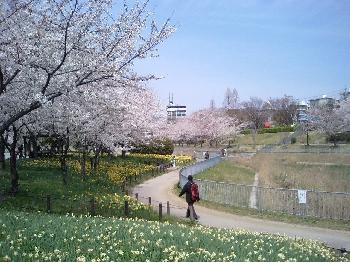 細口池公園遊歩道