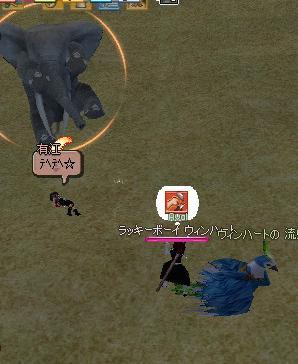 象、すまない・・・w