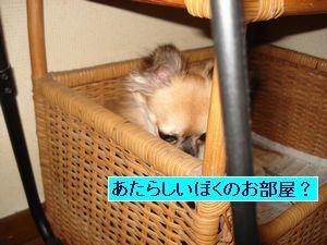 DSC01370_20070917220105.jpg