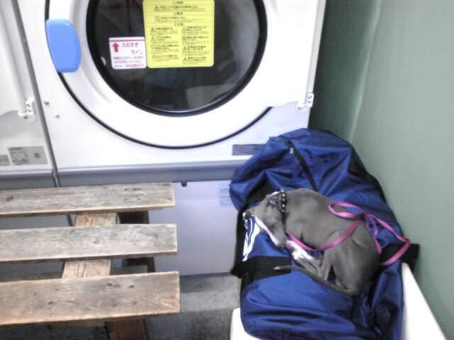 laundry_midori.jpg