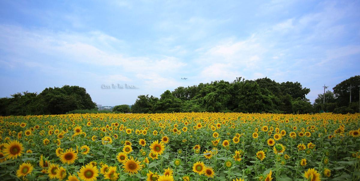 himawari005.jpg