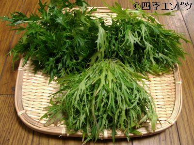 20110227 水菜 収穫