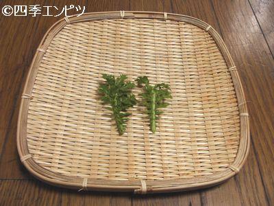20110227 わさび菜 収穫