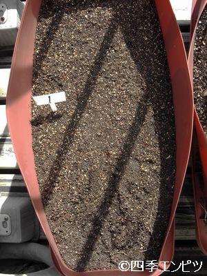 20110306 赤ジャガイモ 1番P