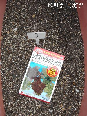 20110417 レタスミックス 新しく種蒔き