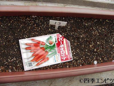20110417 ベビーキャロット 人参 種蒔き