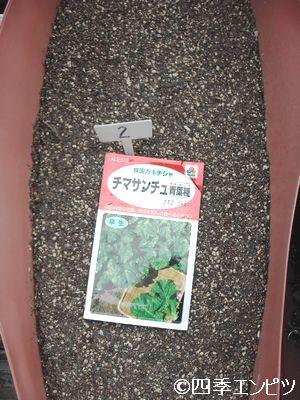 20110417 チマサンチュ 種蒔き