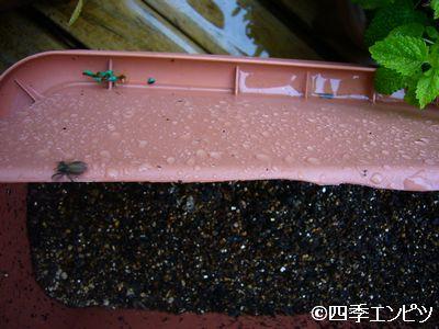 201105 クモ走る 2