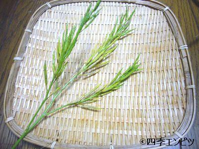20110529 わさび菜 種収穫