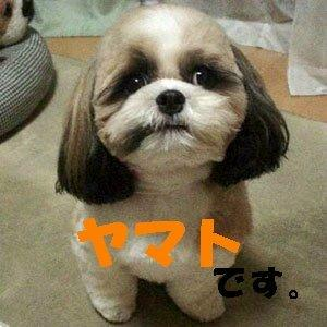 12yamato_1.jpg