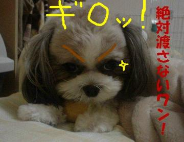 DSC03170.jpg