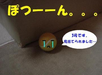 DSC03570.jpg
