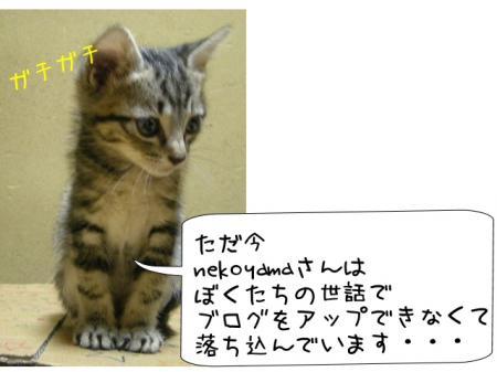 2007.10.1.2.jpg
