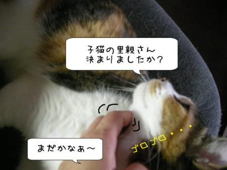 2007.10.11.13.jpg