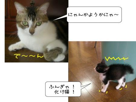 2007.10.11.2.jpg