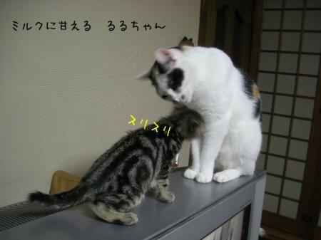 2007.10.16.7.jpg