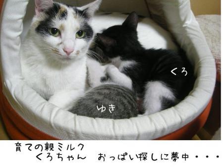 2007.10.18.13.jpg