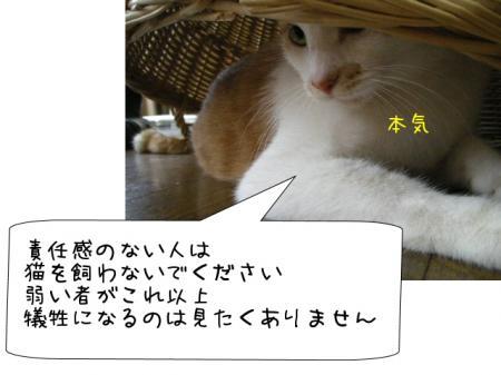 2007.10.2.6.jpg