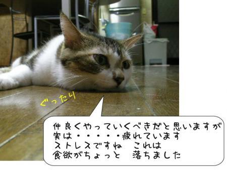 2007.10.2.8.jpg