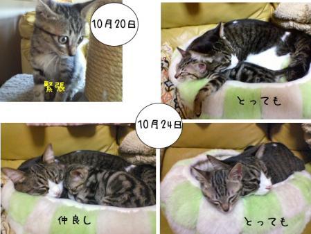 2007.10.28.14.jpg