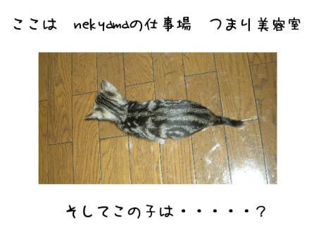 2007.10.28.1.jpg