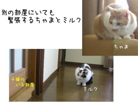 2007.10.4.9.jpg