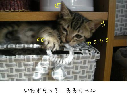 2007.10.6.10.jpg