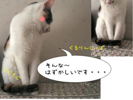 2007.7.4.2.jpg